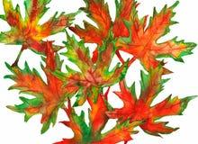 Φύλλα Watercolor πτώσης Στοκ Εικόνα
