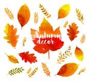 Φύλλα watercolor φθινοπώρου Στοκ εικόνα με δικαίωμα ελεύθερης χρήσης
