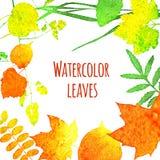 Φύλλα Watercolor Στοκ φωτογραφίες με δικαίωμα ελεύθερης χρήσης