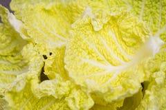 Φύλλα Yeallow Στοκ φωτογραφία με δικαίωμα ελεύθερης χρήσης