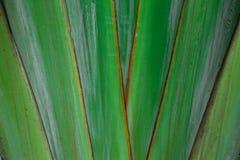Φύλλο δέντρων εσωρούχων στοκ φωτογραφία με δικαίωμα ελεύθερης χρήσης