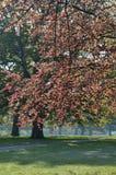 Φύλλο δέντρων την άνοιξη στην αγγλική επαρχία Στοκ φωτογραφία με δικαίωμα ελεύθερης χρήσης