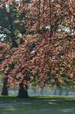 Φύλλο δέντρων την άνοιξη στην αγγλική επαρχία Στοκ εικόνα με δικαίωμα ελεύθερης χρήσης