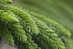Φύλλο δέντρων Στοκ Εικόνα