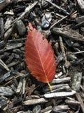Φύλλο δέντρων Στοκ φωτογραφία με δικαίωμα ελεύθερης χρήσης