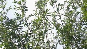 Φύλλο από ένα δέντρο - που κινείται στον αέρα απόθεμα βίντεο