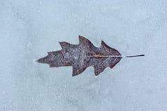 Φύλλο ενός δέντρου Στοκ Εικόνα