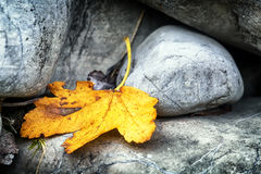 Φύλλο και βράχος Στοκ Εικόνες