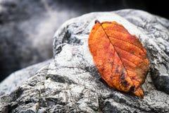 Φύλλο και βράχος Στοκ Φωτογραφία