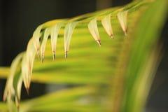 Φύλλο καρύδων στο θερινό χρόνο Στοκ Εικόνα