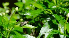 Φύλλο κινηματογραφήσεων σε πρώτο πλάνο πράσινο με μια μύγα στοκ εικόνα με δικαίωμα ελεύθερης χρήσης