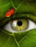 Φύλλο ματιών στοκ εικόνα με δικαίωμα ελεύθερης χρήσης