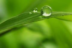 Φύλλο με τα σταγονίδια βροχής - εικόνα αποθεμάτων Στοκ εικόνα με δικαίωμα ελεύθερης χρήσης