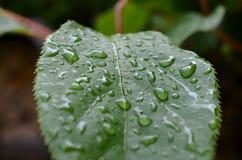 Φύλλο με τις σταγόνες βροχής Στοκ Φωτογραφία