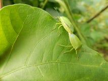 Φύλλο με το έντομο στοκ εικόνα με δικαίωμα ελεύθερης χρήσης