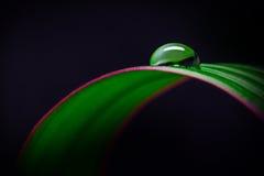 Φύλλο με το μαργαριτάρι νερού στοκ φωτογραφία με δικαίωμα ελεύθερης χρήσης