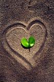 Φύλλο μορφής καρδιών Στοκ Εικόνες
