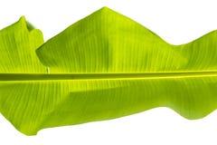 Φύλλο μπανανών, τα φύλλα Στοκ Εικόνες