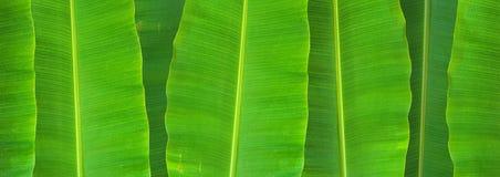Φύλλο μπανανών στοκ φωτογραφίες με δικαίωμα ελεύθερης χρήσης