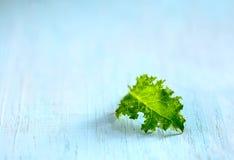 Φύλλο μωρών του Kale Στοκ εικόνα με δικαίωμα ελεύθερης χρήσης