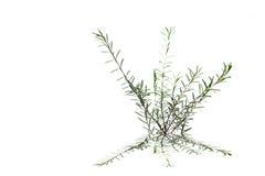 φύλλο που απομονώνεται στο άσπρο υπόβαθρο Στοκ Εικόνα