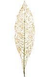 Φύλλο που τρώεται από τα ζωύφια που απομονώνονται Στοκ εικόνες με δικαίωμα ελεύθερης χρήσης
