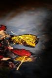 Φύλλο πτώσης φθινοπώρου στο νερό Στοκ εικόνα με δικαίωμα ελεύθερης χρήσης
