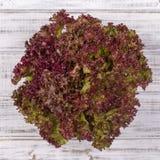 Φύλλο σαλάτας Φυτό σαλάτας μαρουλιού, υδροπονικά φυτικά φύλλα Στοκ Εικόνα