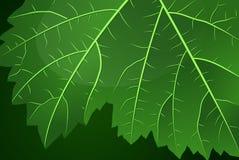 φύλλο σταφυλιών πεδίων βάθους ρηχό Στοκ εικόνα με δικαίωμα ελεύθερης χρήσης