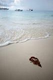 Φύλλο στην παραλία στο νησί Similan Στοκ Εικόνες