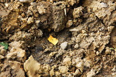 Φύλλο στη λάσπη Στοκ φωτογραφίες με δικαίωμα ελεύθερης χρήσης