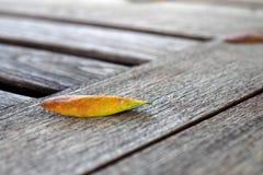 Φύλλο στον ξύλινο πίνακα Στοκ εικόνες με δικαίωμα ελεύθερης χρήσης