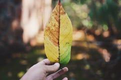 Φύλλο στο δάσος Στοκ εικόνες με δικαίωμα ελεύθερης χρήσης