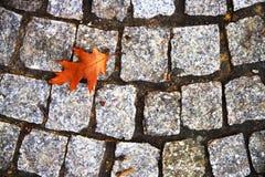 Φύλλο στο έδαφος Στοκ Φωτογραφίες