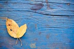 Φύλλο στο ξύλινο πάτωμα Στοκ Εικόνα