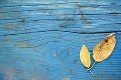 Φύλλο στο ξύλινο πάτωμα Στοκ εικόνα με δικαίωμα ελεύθερης χρήσης