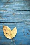 Φύλλο στο ξύλινο πάτωμα Στοκ Εικόνες