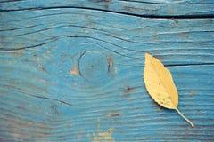 Φύλλο στο ξύλινο πάτωμα Στοκ εικόνες με δικαίωμα ελεύθερης χρήσης