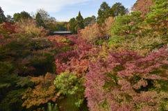 Φύλλο σφενδάμου κατά τη διάρκεια της εποχής φθινοπώρου στο Κιότο Ιαπωνία Στοκ εικόνες με δικαίωμα ελεύθερης χρήσης