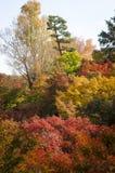 Φύλλο σφενδάμου κατά τη διάρκεια της εποχής φθινοπώρου στο Κιότο Ιαπωνία Στοκ εικόνα με δικαίωμα ελεύθερης χρήσης
