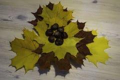 Φύλλο σφενδάμου με τα κάστανα στοκ φωτογραφία