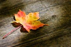 Φύλλο σφενδάμου στην ξύλινη σανίδα Στοκ εικόνα με δικαίωμα ελεύθερης χρήσης