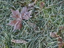 Φύλλο σφενδάμου στον παγετό πρωινού Στοκ Φωτογραφίες