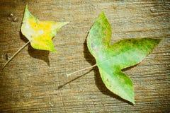 Φύλλο σφενδάμου στο ξύλο Στοκ Εικόνα