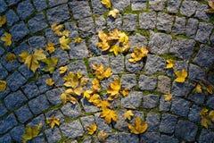 Φύλλο σφενδάμου στο πεζοδρόμιο Στοκ Φωτογραφία