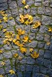 Φύλλο σφενδάμου στο πεζοδρόμιο Στοκ φωτογραφίες με δικαίωμα ελεύθερης χρήσης