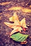 Φύλλο σφενδάμου το φθινόπωρο Στοκ Εικόνες