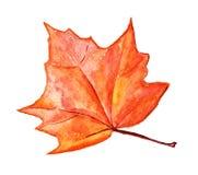 Φύλλο σφενδάμου φθινοπώρου Στοκ Φωτογραφία