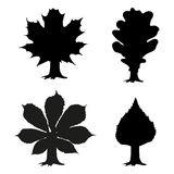 Φύλλο της βαλανιδιάς σφενδάμνου chestnat και της σημύδας Απεικόνιση αποθεμάτων