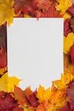 Φύλλο του εγγράφου για τα κίτρινα φύλλα φθινοπώρου Στοκ Εικόνες